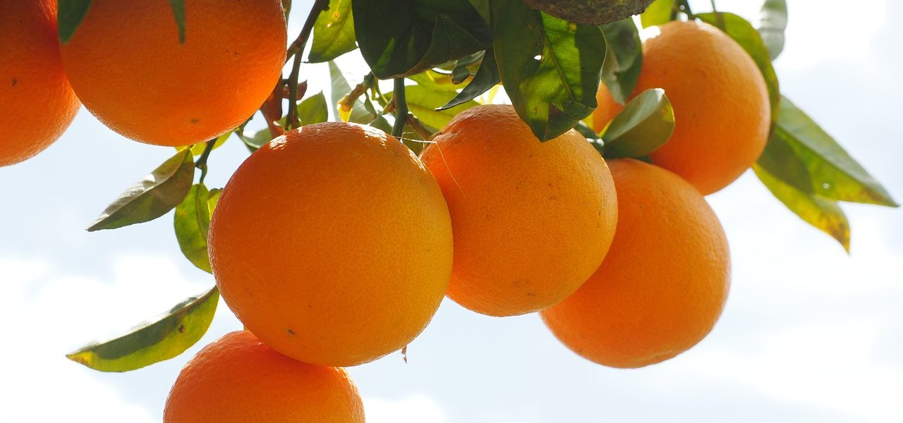The availability of citrus in the ancient world
