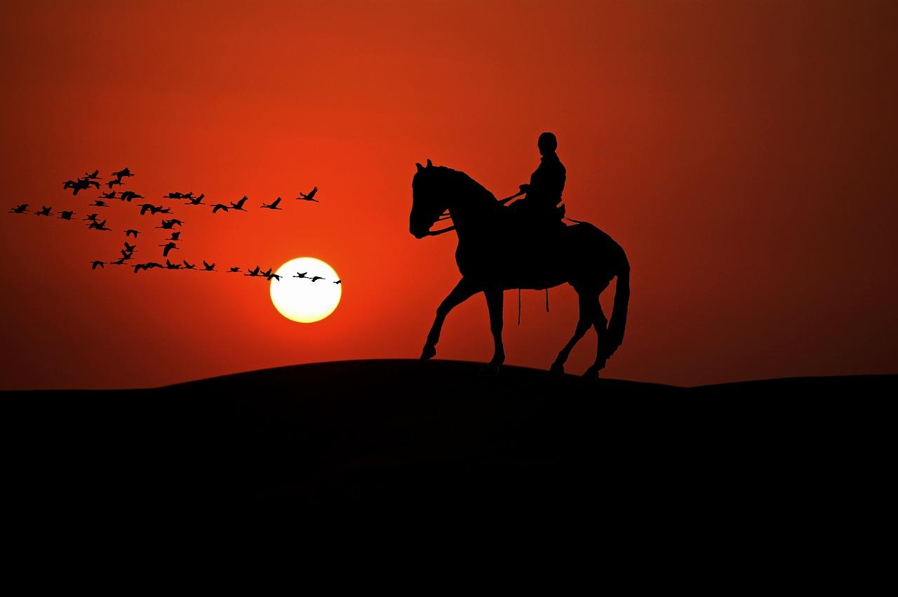 A horse called Comanche