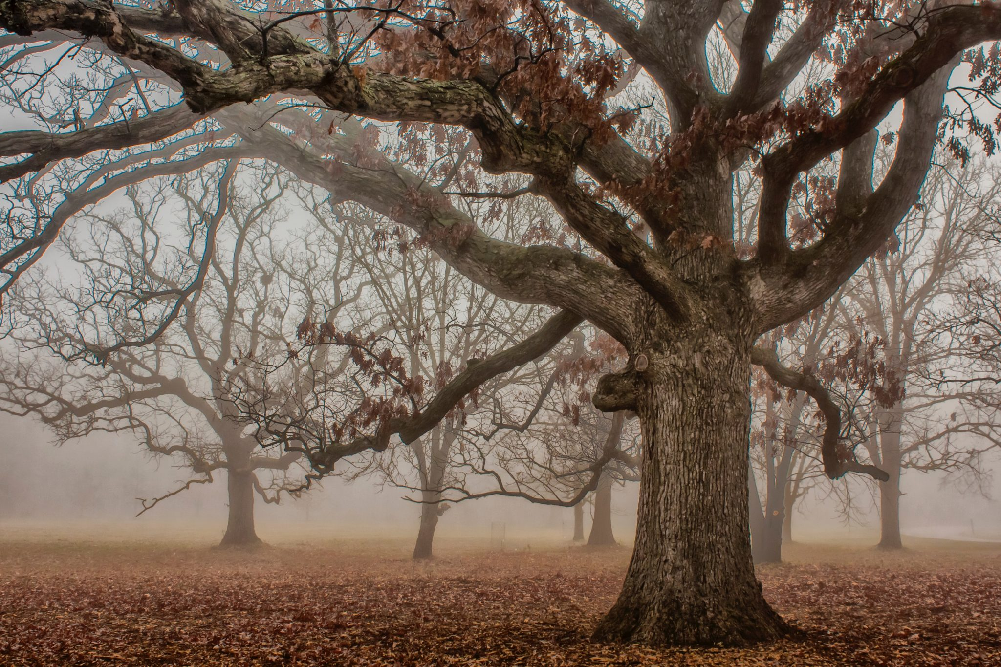 The slow death of autumn